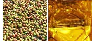 浸透力が高く、高純度のつばき油を生み出す独自製法。黄金色は上質の証。